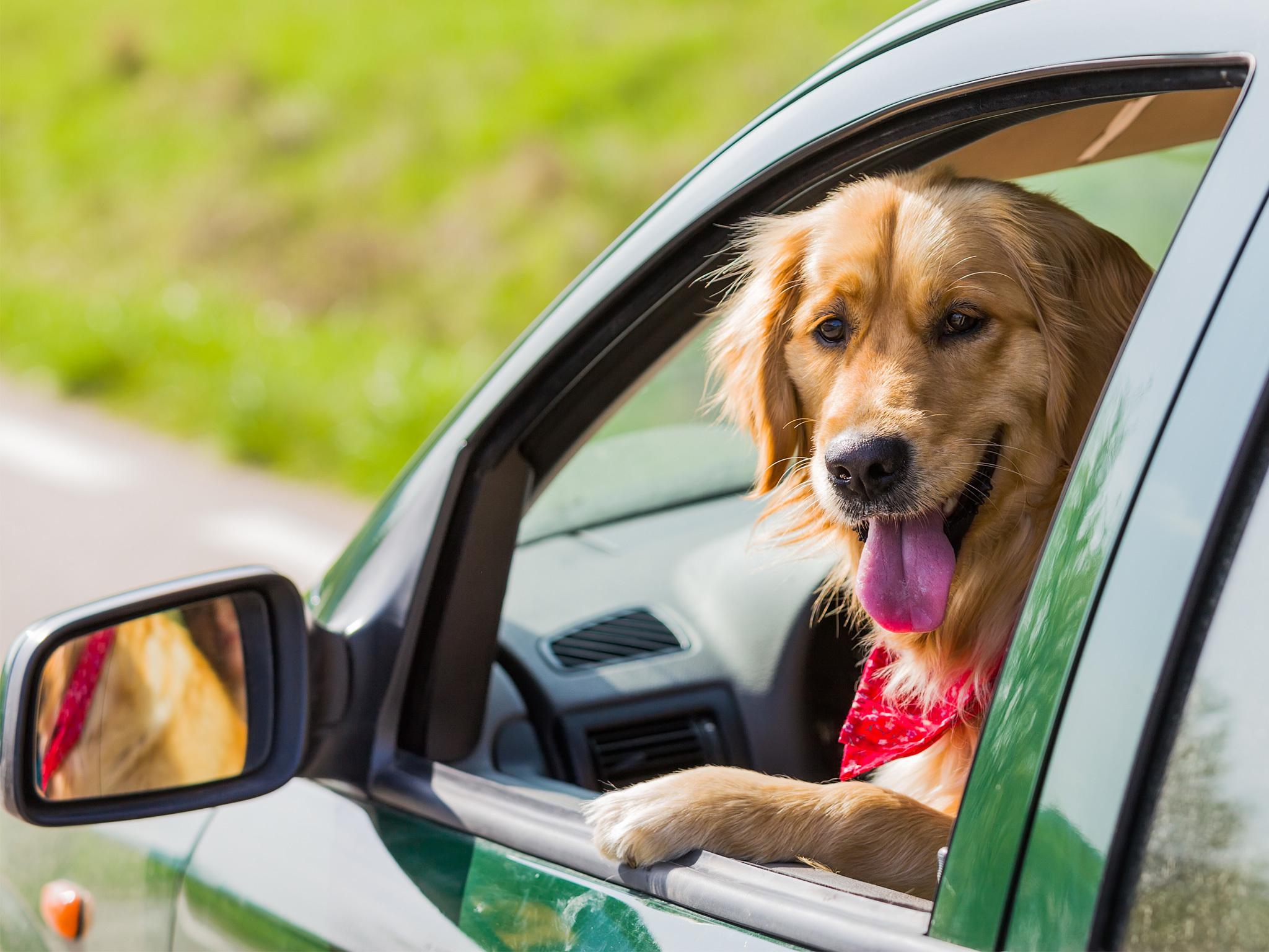 Abre sus puertas el centro de ayuda para mascotas en la for Puertas para mascotas